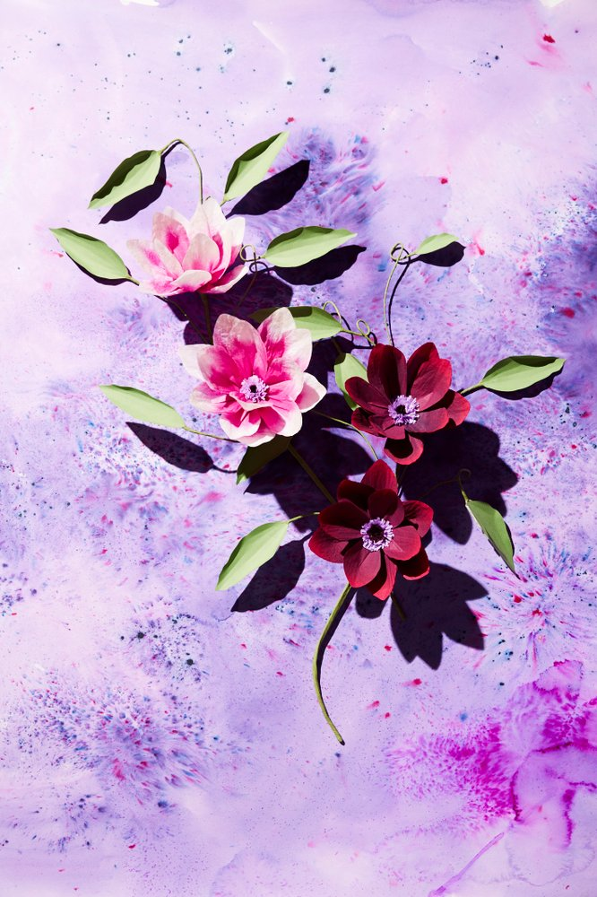 Clematis by Livia Cetti. (Photo: The Green Vase)